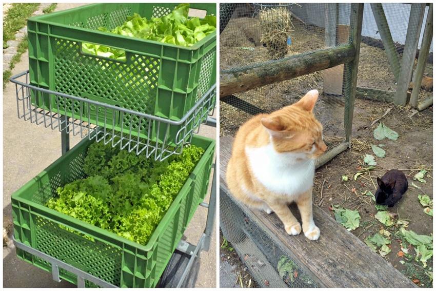 salat-tiere-bleiche-dettingen