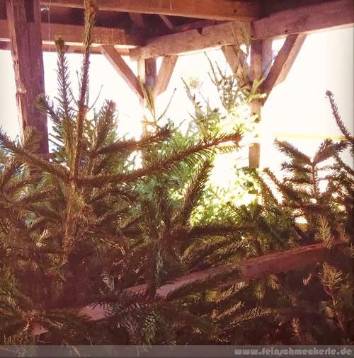 christbaum verkauf in  reutlingen metzingen
